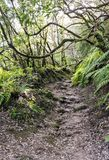 Path in the forest of Anaga. On the island of Tenerife, Canary Islands Spain. It´s a vertical picture Royalty Free Stock Photos