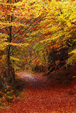 Path in the forest at autumn Stock Images