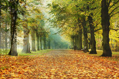 Path in the forest. Path through the autumn forest with beautiful colored leaves Royalty Free Stock Photo