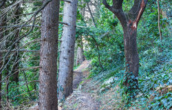 Path in the forest in autumn. Stock Photo