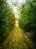 Path through forest in autumn cloudy day. Path through forest in autumn, cloudy day. Near the Kragujevac - Serbia royalty free stock images