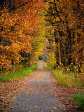 Path in forest during autumn Stock Photos