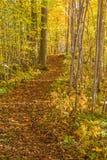 Path through a forest in autumn Stock Photos