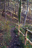 Path through the forest in autumn. Path and fence through the forest in autumn Stock Photography