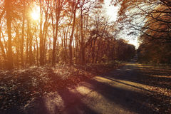 Path in forest during autumn. Landscape of path in forest during fall Royalty Free Stock Images
