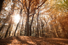 Path in forest during autumn. Landscape of path in forest during fall Stock Image