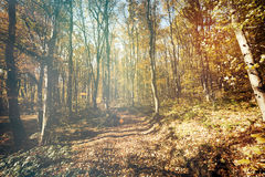 Path in forest during autumn. Landscape of path in forest during fall Stock Images