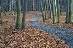 The path through the forest, autumn landscape Royalty Free Stock Image