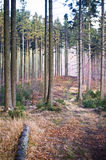 Path in forest during the autumn Royalty Free Stock Images