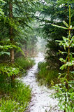 Path in forest during the autumn Stock Photo