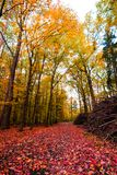 The path in the forest in the autumn. Many vibrant colors, beaut Stock Image
