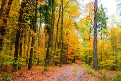 The path in the forest in the autumn. Many vibrant colors, beaut Royalty Free Stock Photos