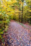 The path in the forest in the autumn. Many vibrant colors, beaut Royalty Free Stock Photography