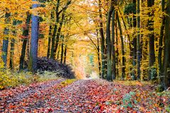 The path in the forest in the autumn. Many vibrant colors, beaut Royalty Free Stock Image