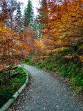 Path in the forest in autumn royalty free stock photos