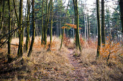 Path in the forest. During the autumn time Stock Photos