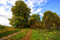 Path in the forest in autumn and trees Royalty Free Stock Photos