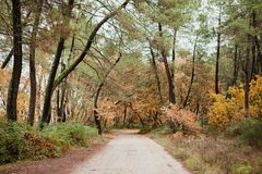 Path in the forest. With the autumn in the trees Royalty Free Stock Images