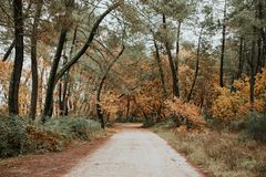 Path in the forest. With the autumn in the trees Stock Photos
