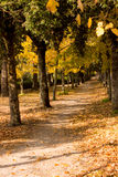 Path in a forest in autumn Royalty Free Stock Images