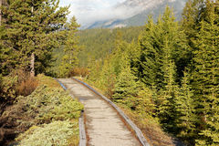 A path through a forest at banff national park royalty free stock photo