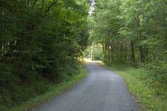 A Path through the Forest Stock Photos