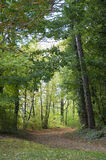 A Path into the Forest in Bavaria, Germany Stock Photos