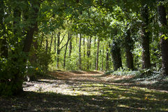 A Path into the Forest in Bavaria, Germany Royalty Free Stock Image