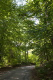 A Path through the Forest Royalty Free Stock Photography