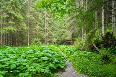 Path in a forest Royalty Free Stock Image
