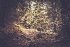 Path in a  forest Stock Photography