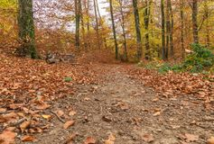 Path through the forest. With beautiful autumn multicolor leaves. Forest near the city of Lausanne, canton Vaud, Switzerland Royalty Free Stock Images