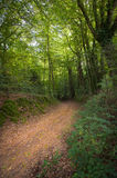 Path in the forest Royalty Free Stock Photos