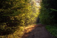 Path in forest Royalty Free Stock Image