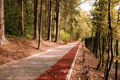 Path in the Forest with Bike stripe. Peaceful path with Bike stripe in the forest in autumn Royalty Free Stock Images