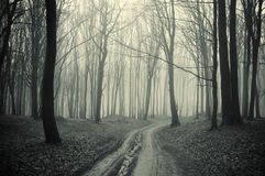 Path through a forest with black trees and mist Stock Photos