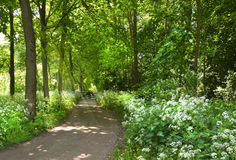 Path in forest with flowers Stock Photography