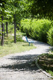 The Path in the Forest Stock Photography