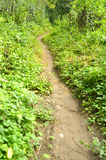 Path through a forest in Cheile Nerei Natural Reservation Royalty Free Stock Photo