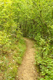 Path through a forest in Cheile Nerei Natural Reservation Stock Photography