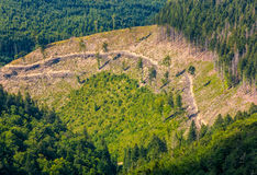 Path through forest clearing on mountain slope. Nature background view from the top of a hillside stock images