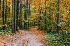 Path in a forest with colorful autumn leaves. And trees stock photo