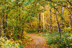 Path in a forest with colorful autumn leaves. And trees stock images