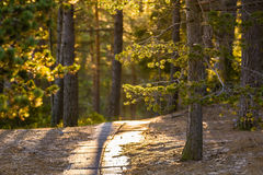 Path in forest. Path of concrete material, leading into the forest. Light coming through the trees Stock Image