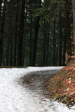 Path through a forest in the countryside, winter time Royalty Free Stock Photography