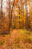 Path into forest covered by autumn leaves Royalty Free Stock Photos
