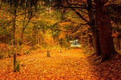 A path in the forest covered with leaves Royalty Free Stock Photos