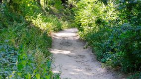 Path in the forest with deciduous trees. On a summer sunny day, filmed using zooming and moving the camera stock video