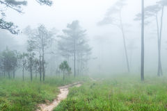 Path through the forest in the early spring during rainfall Stock Photos