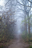 Path in forest with fog Royalty Free Stock Photo